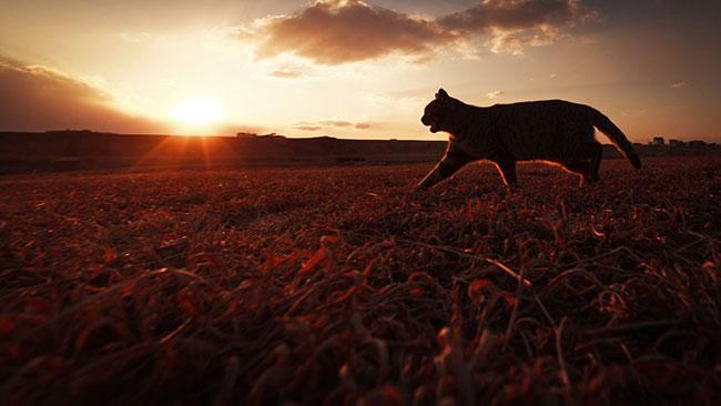 beautiful cat photos 15 (1)