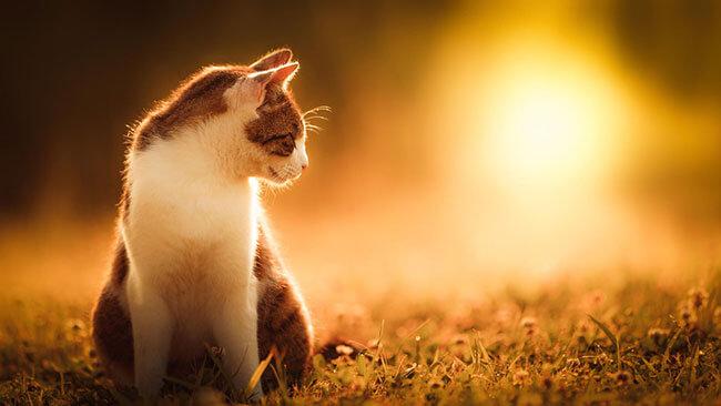 beautiful cat photos 16 (1)