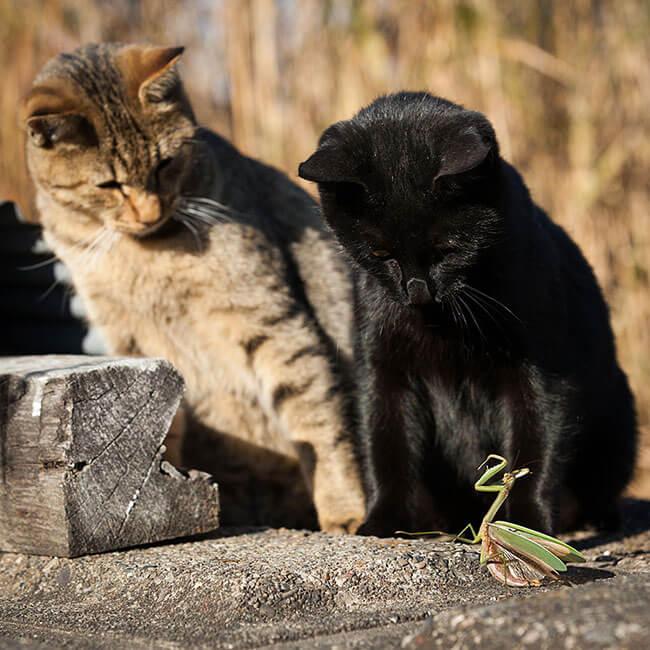 beautiful cat photos 17 (1)
