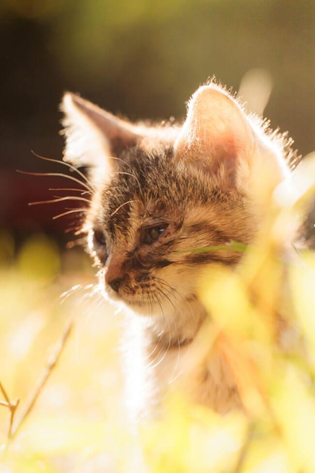 beautiful cat photos 18 (1)