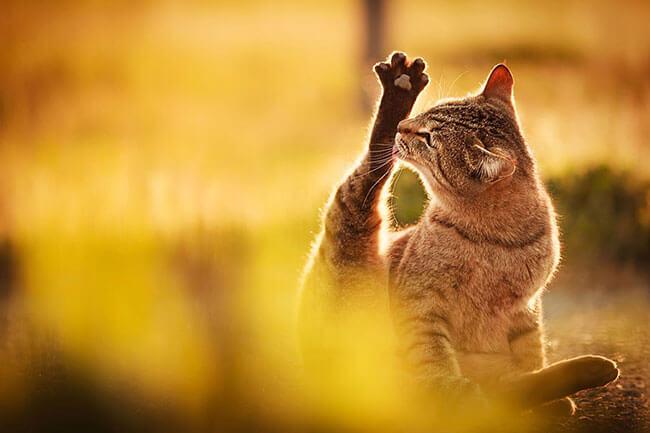 beautiful cat pictures 2 (1)