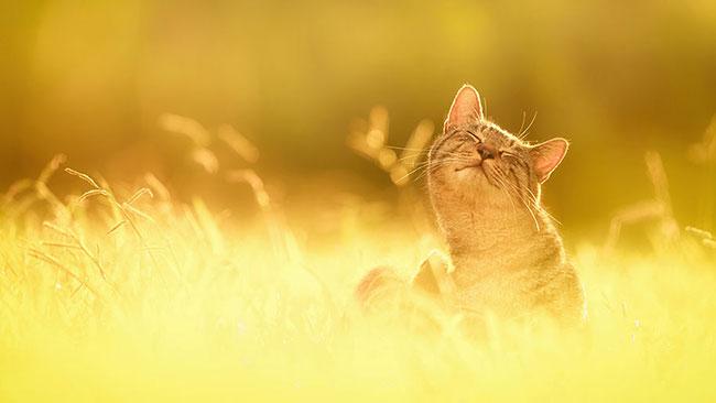 beautiful kitten pictures 3 (1)
