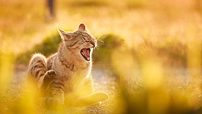 beautiful kitten pictures 5 (1)