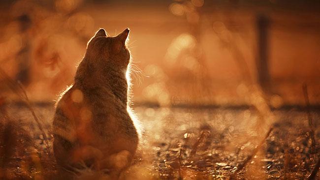stunning cat pictures 8 (1)