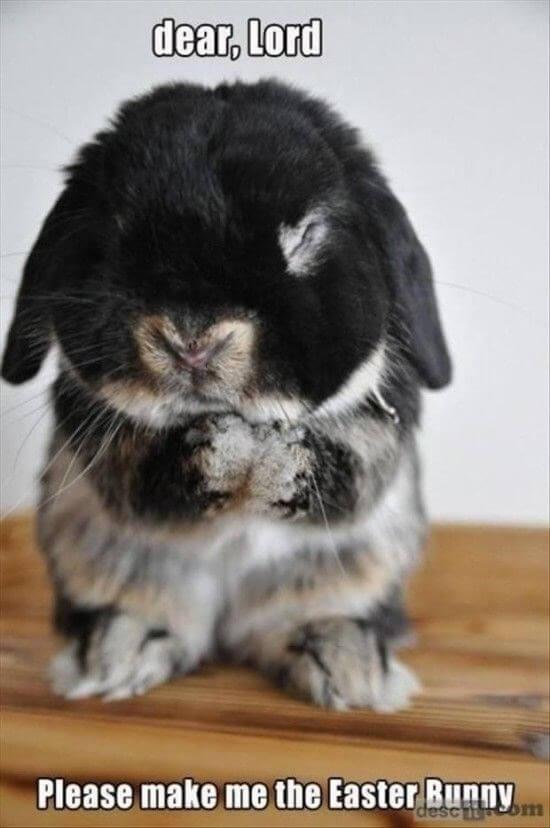 bunny memes 1 (1)