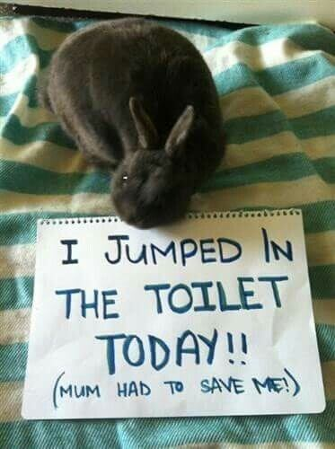 bunny pics 11 (1)