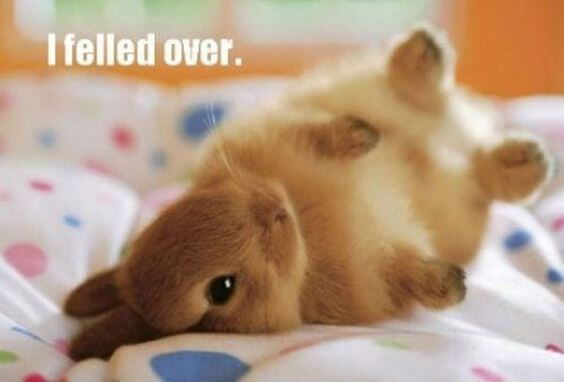 rabbit memes 13 (1)