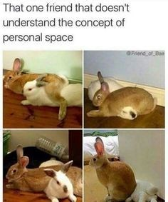 rabbit memes 14 (1)