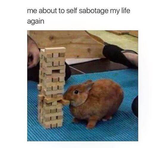 rabbit memes 15 (1)