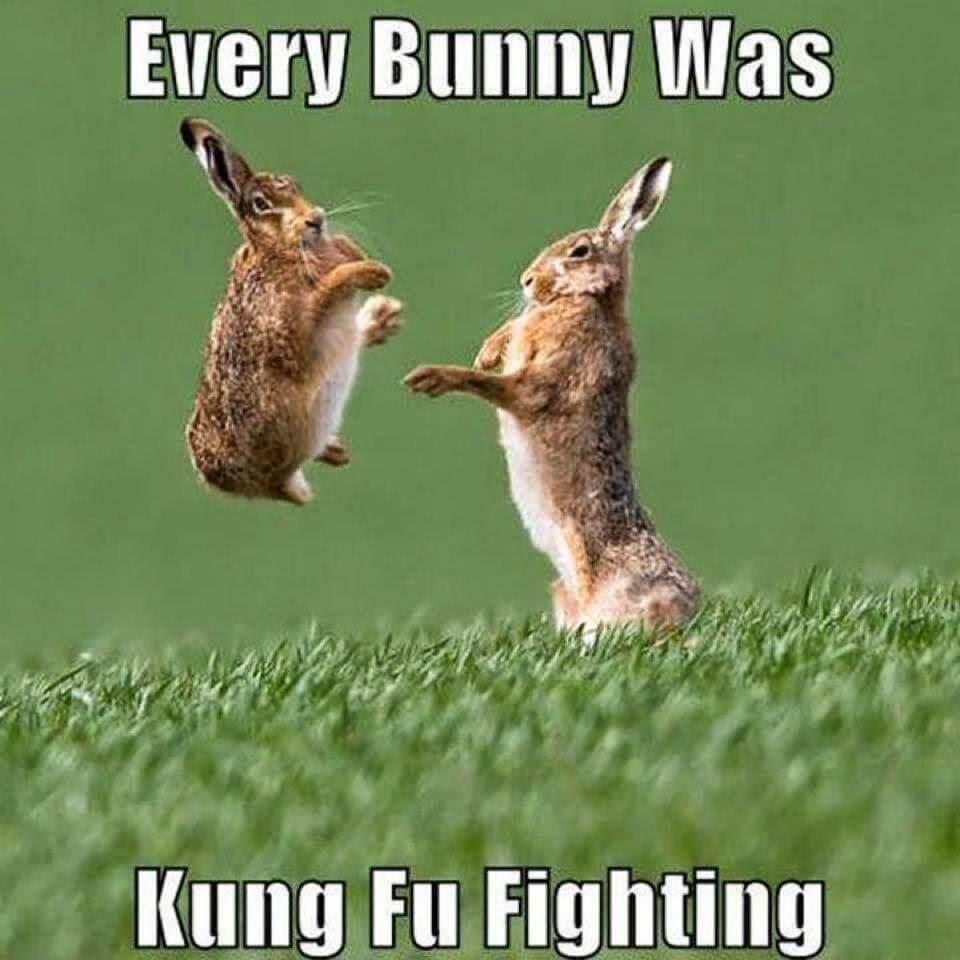 rabbit memes 16 (1)