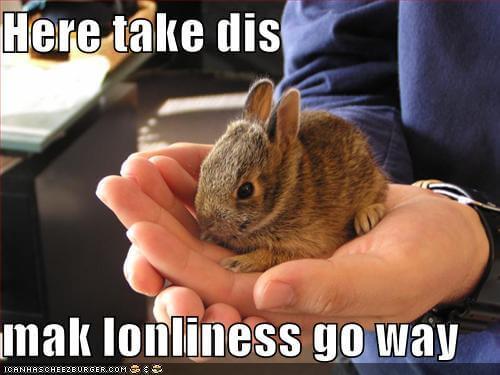 rabbit memes 17 (1)