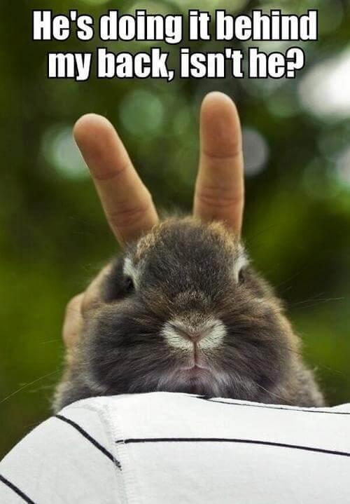 bunnies memes 18 (1)