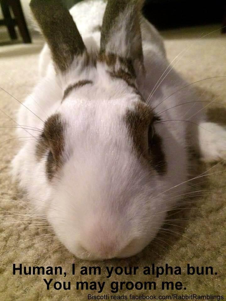 bunnies memes 19 (1)