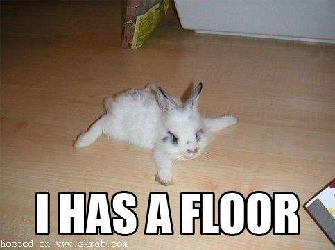 bunny memes 2 (1)