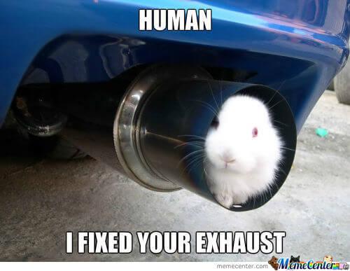 bunnies memes 20 (1)