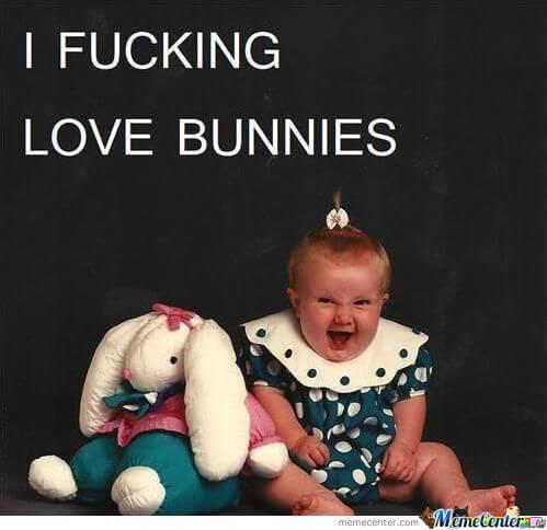 bunnies memes 21 (1)