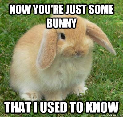 bunnies memes 22 (1)