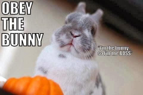 bunnies memes 23 (1)