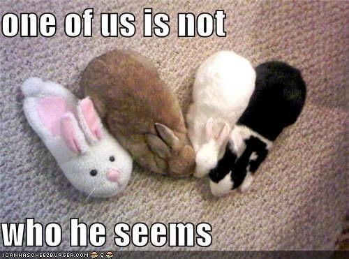 bunnies memes 24 (1)