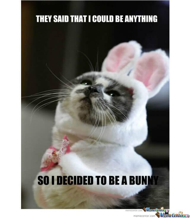 bunny memes 26 (1)