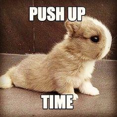 bunnies memes 27 (1)