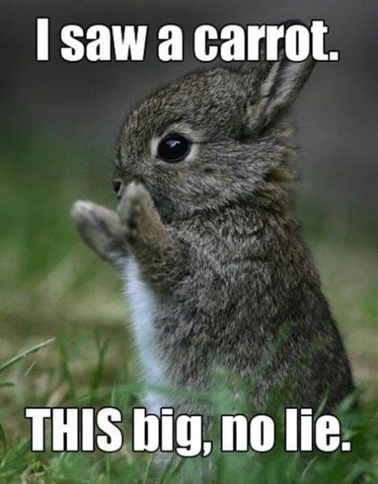 bunny puns 3 (1)