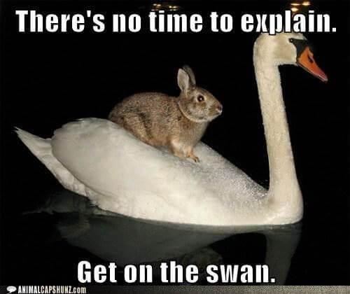 bunny puns 5 (1)