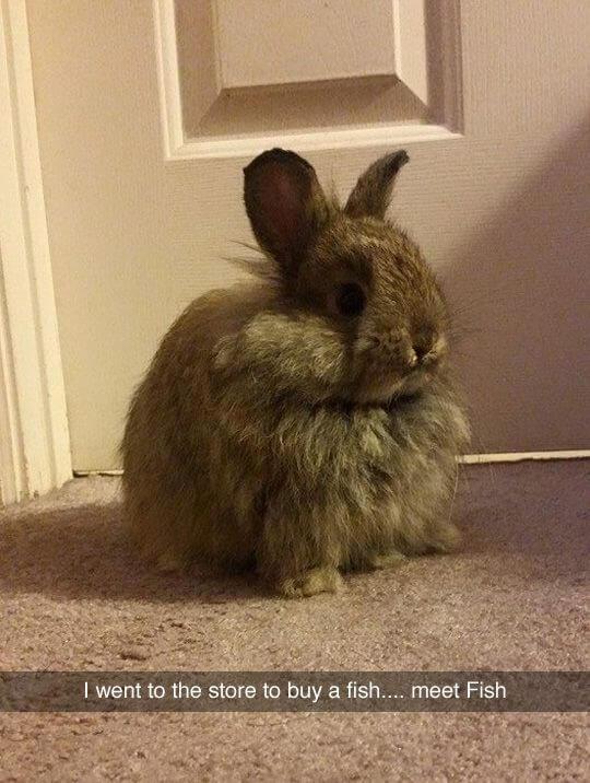 bunny puns 7 (1)