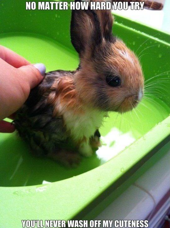 bunny pics 8 (1)