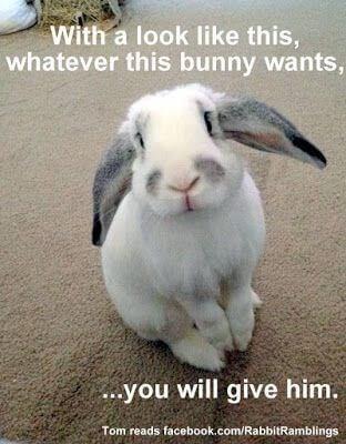 bunny pics 9 (1)