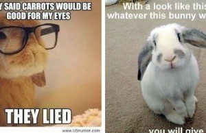 bunny memes feat (1)