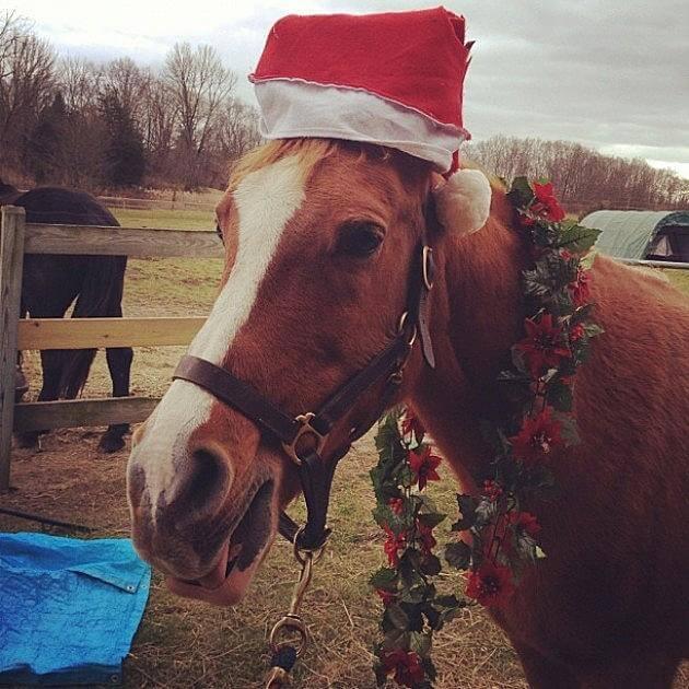 christmas horses 1 (1)