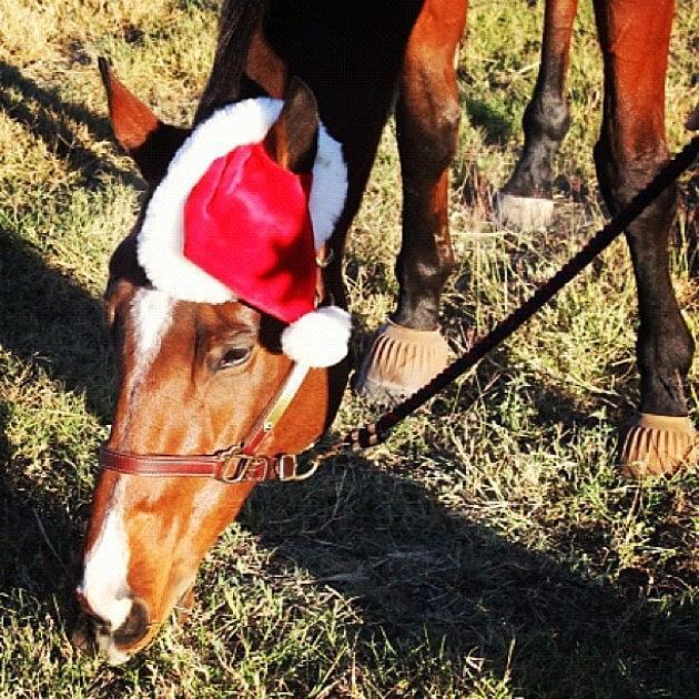 holiday horses 10 (1)