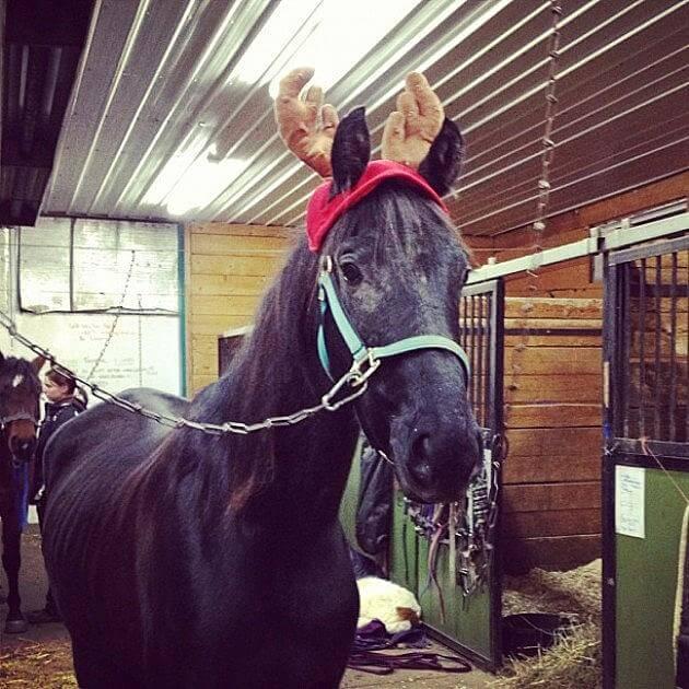 holiday horses 11 (1)