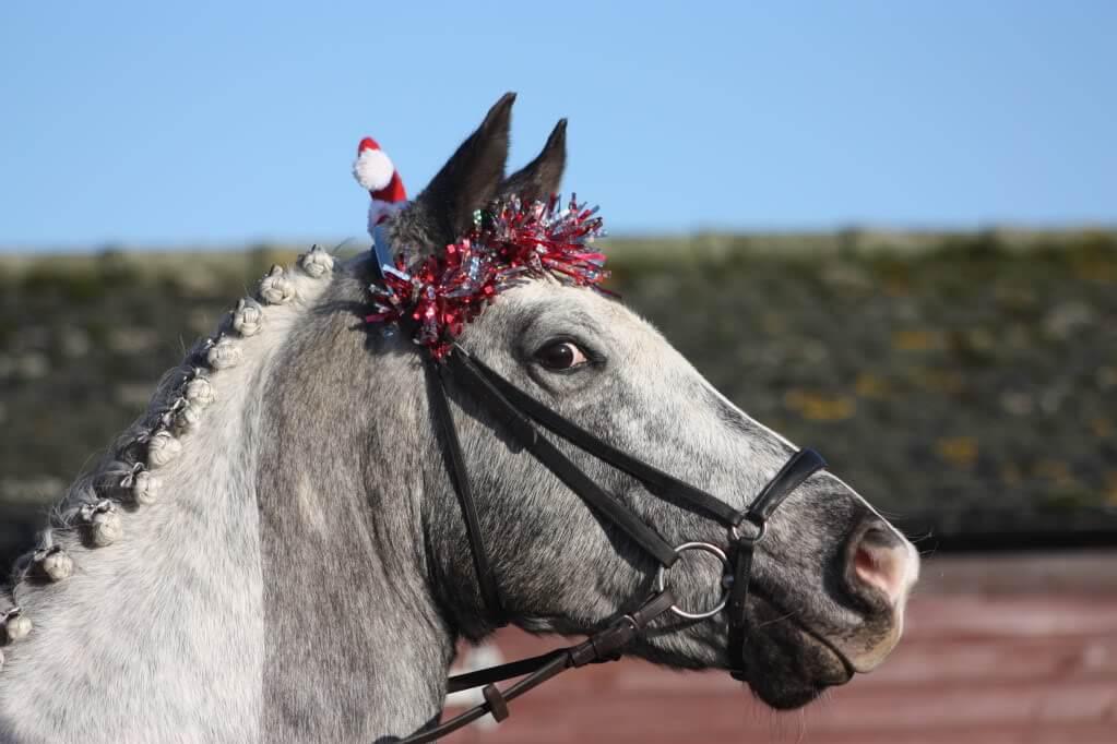 holiday horses 14 (1)