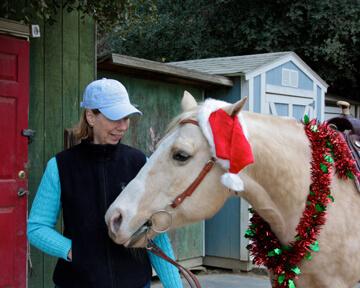 holiday horses 15 (1)