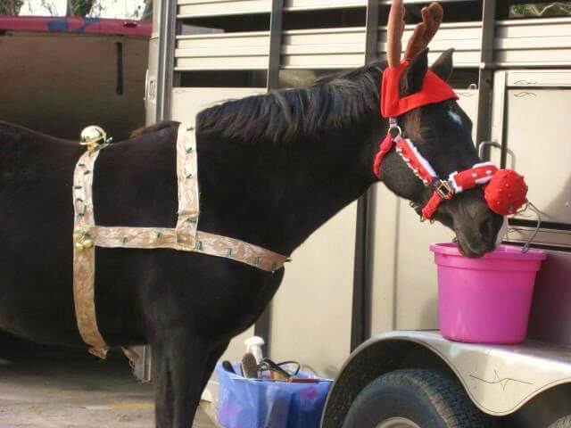 holiday horses 16 (1)