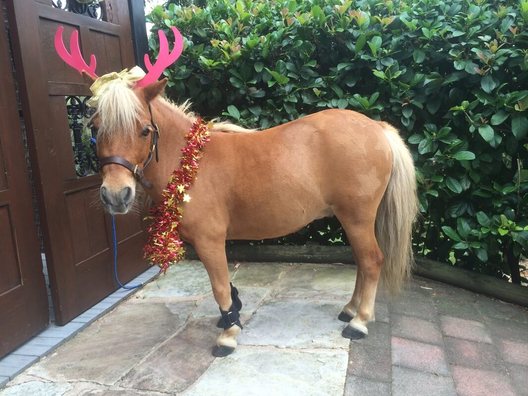 christmas horses 17 (1)