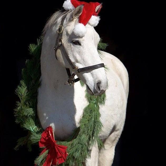 christmas horses 2 (1)