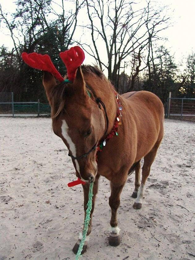 christmas decorated horses 3 (1)