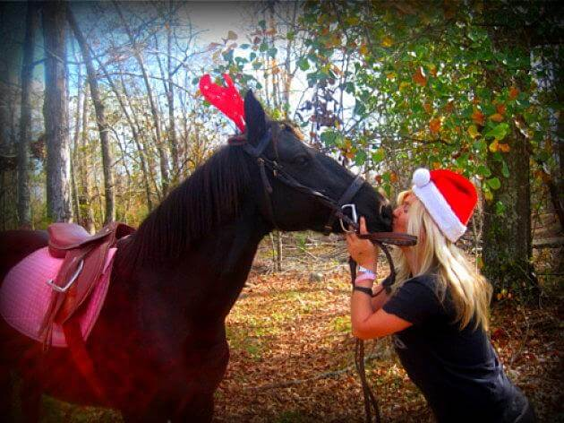 christmas decorated horses 6 (1)