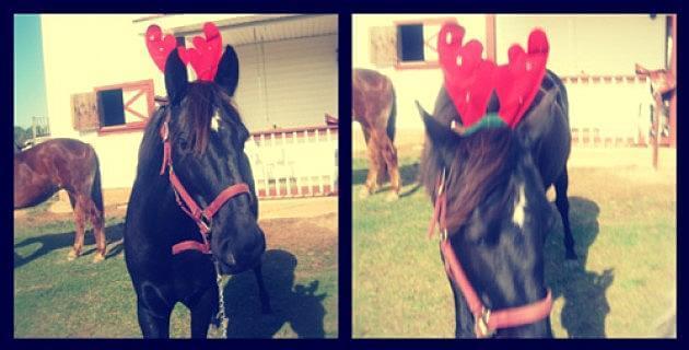 holiday horses 8 (1)