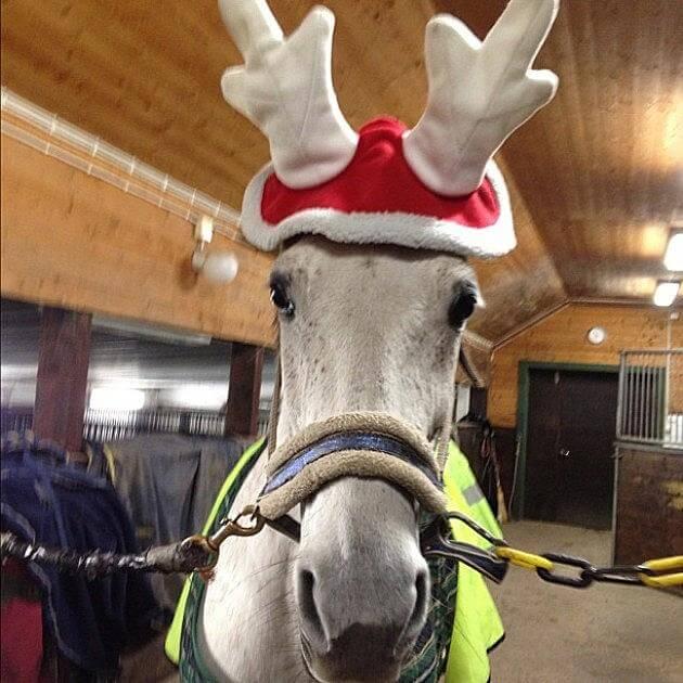 holiday horses 9 (1)
