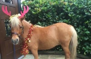 christmas horses feat (1)