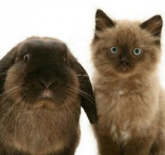 cute bunnies and kittens feat (1)