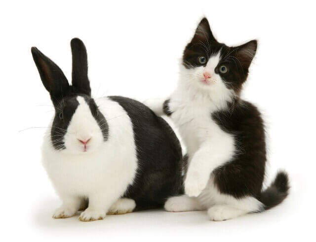 cute bunnies and kittens look alike 1 (1)