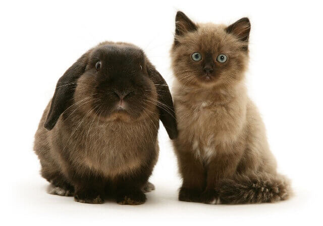 cute bunnies and kittens look alike 10 (1)