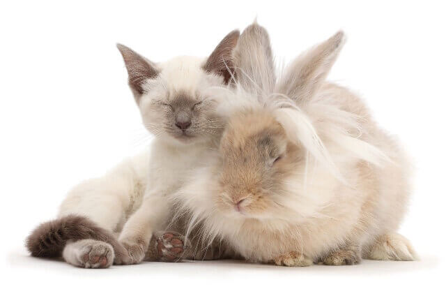 cute bunnies and kittens look alike 12 (1)