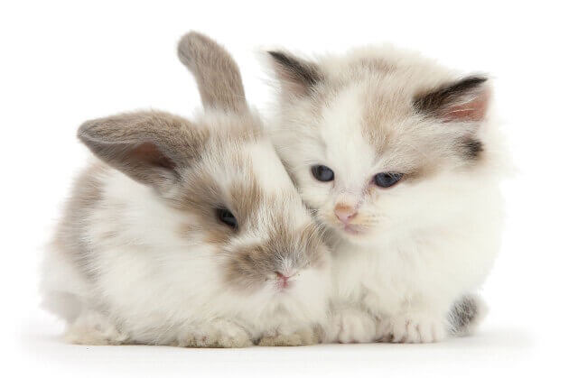 cute bunnies and kittens look alike 13 (1)