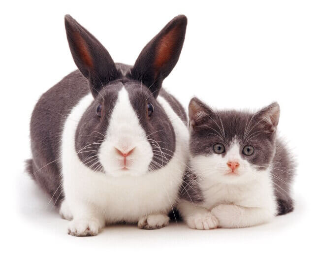 cute bunnies and kittens look alike 2 (1)
